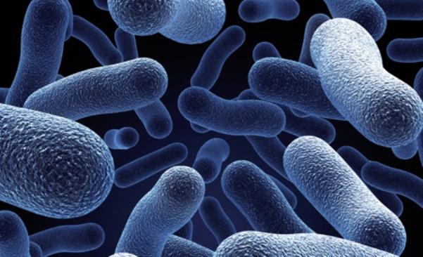 O suplemento de lactobacilos faz bem para o organismo. (Foto: Divulgação)