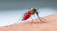 sintomas da dengue moskito