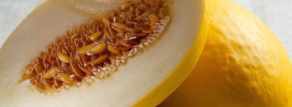 Semente de melão: veja seus benefícios pro corpo!